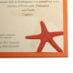 stella marina portfolio dettaglio